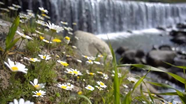 Daisy Flowers And Waterfall: Stock Video