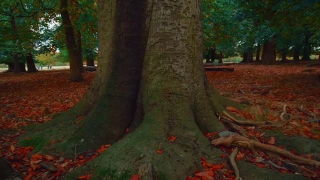 A Big Tree: Stock Video
