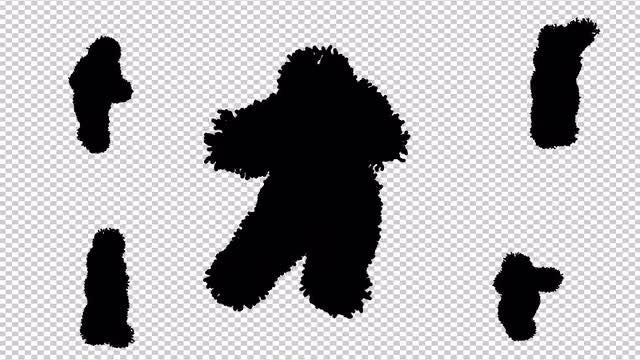 Silhouette Of A Shaggy Dancer: Stock Motion Graphics