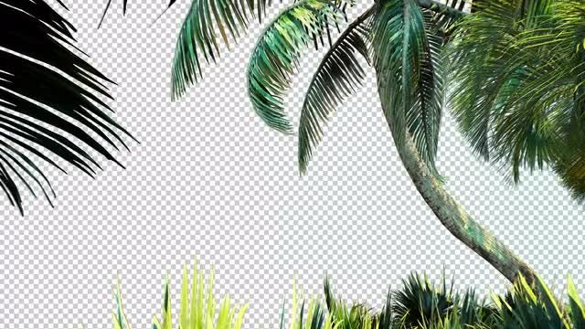 Palm Trees Tropical  Overlay: Stock Motion Graphics