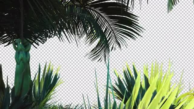 Outdoors And Palm Tree Overlay: Stock Motion Graphics