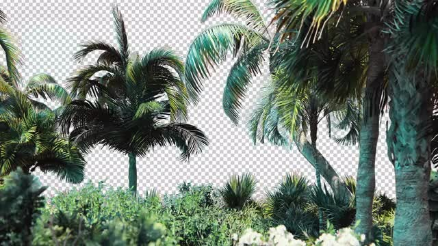 Tropical Outdoors Overlay: Stock Motion Graphics