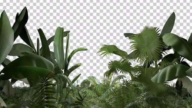 Tropical Scene Overlay: Stock Motion Graphics