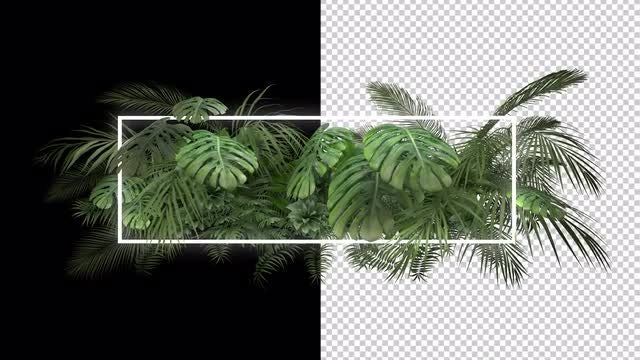 Tropical Plant With Neon Frame: Stock Motion Graphics