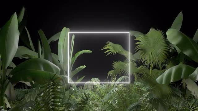Tropical Forest Title Frame: Stock Motion Graphics