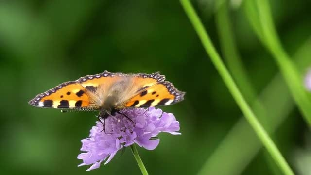 Butterfly On Flower: Stock Video
