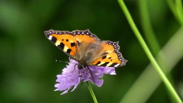 Close-up Of A Butterfly: Stock Video