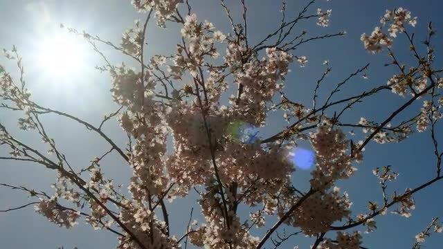 Spring Season: Stock Video