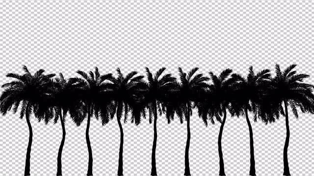 Silhouette Of Palm Trees: Stock Motion Graphics