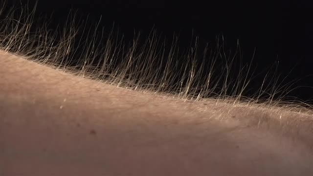 Rising Arm Hairs: Stock Video