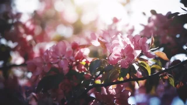 Flowering Spring Garden: Stock Video