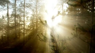 Sunlight: Stock Video
