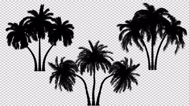 Three Palm Trees Silhouette: Stock Motion Graphics