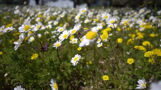 Flowers In Spring: Stock Video