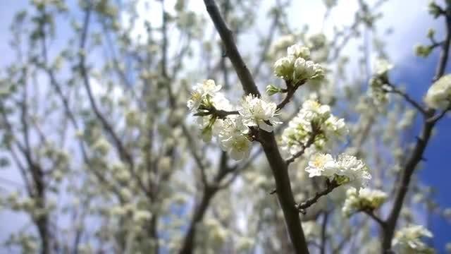 Springtime Flowers: Stock Video
