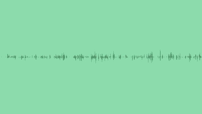 Woodland Birds: Sound Effects