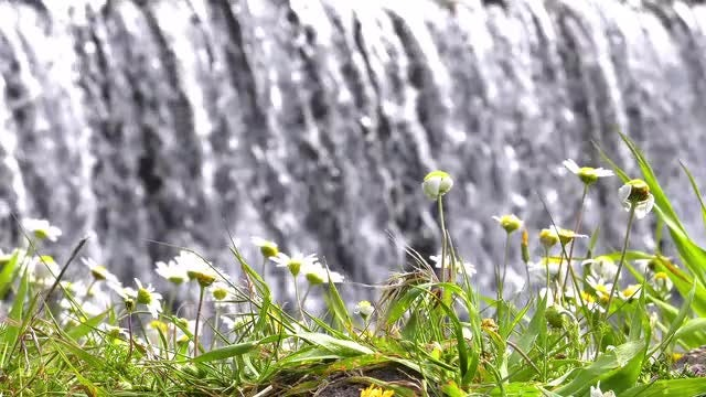 Flowers And Waterfall: Stock Video