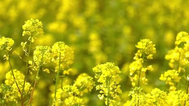 Flowers In Windy Field: Stock Video