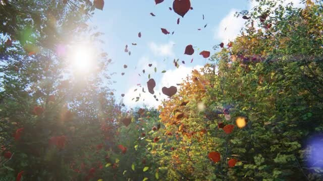 Autumn Leaves Shower: Stock Motion Graphics