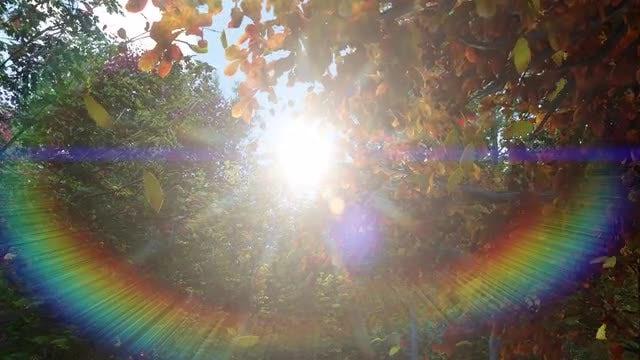 Towards The Sun: Stock Motion Graphics