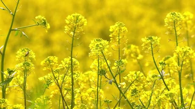 Yellow Plants: Stock Video