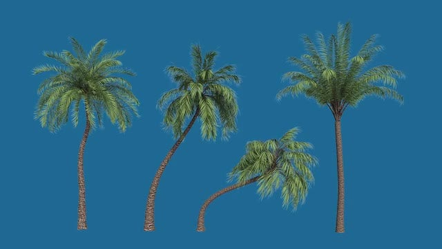 Palm Trees: Stock Motion Graphics