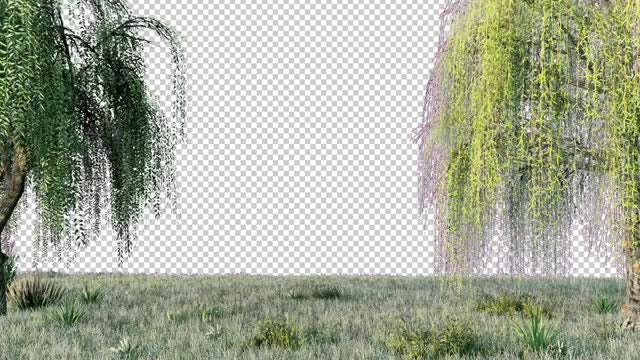 Weeping Willow: Stock Motion Graphics