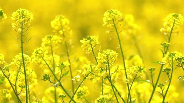 Yellow Plant Leaves: Stock Video