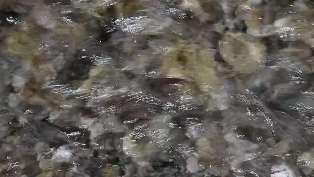 Spring Water Gushing: Stock Video