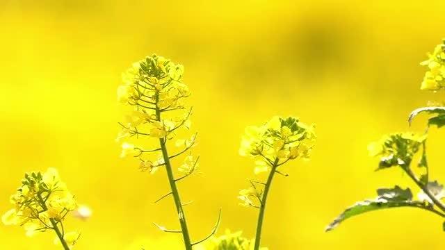 Flowers Swaying In Wind: Stock Video