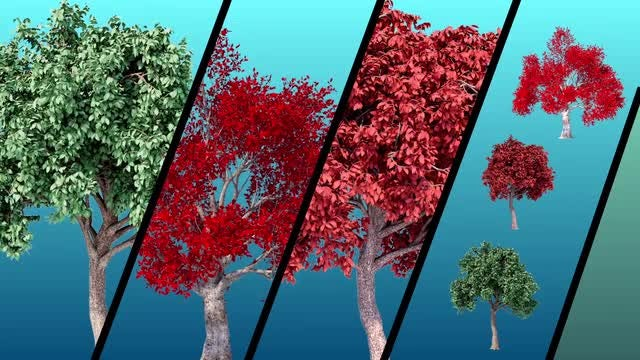 Tree Pack 1: Stock Motion Graphics