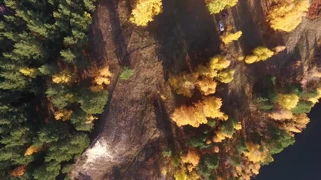 Autumn Trees: Stock Video