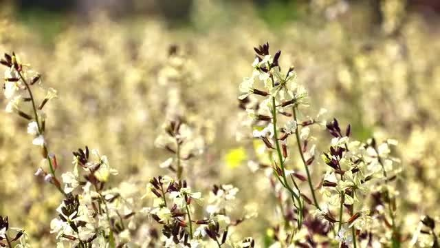 Flowers Swaying: Stock Video