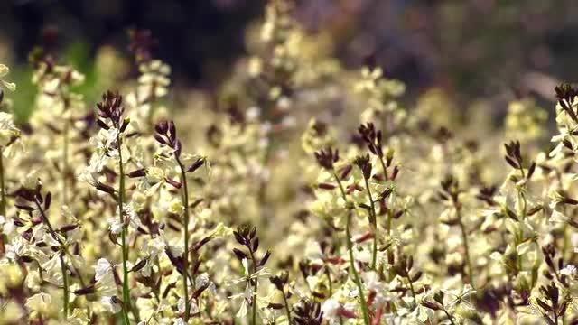 Flowers OnWindy Day: Stock Video