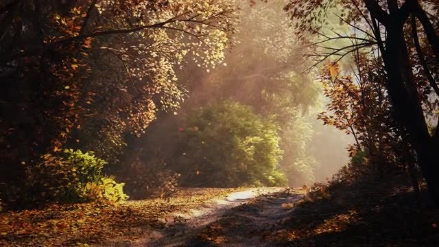 Path In Autumn Forest: Stock Motion Graphics