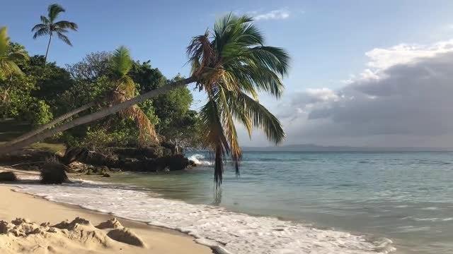 Paradise Island: Stock Video