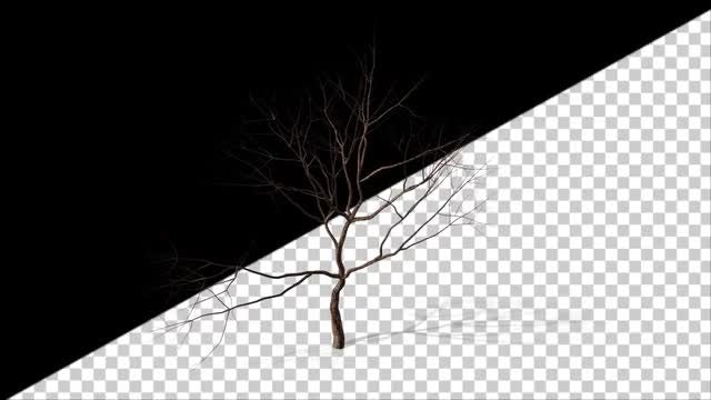 Dry Tree Looping: Stock Motion Graphics