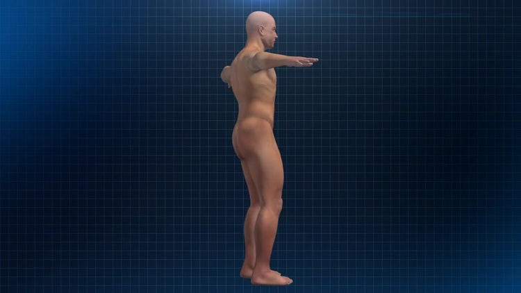 Human Male Anatomy: Stock Motion Graphics