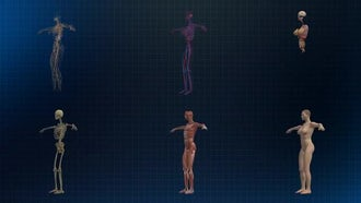 Human Female Anatomy: Motion Graphics
