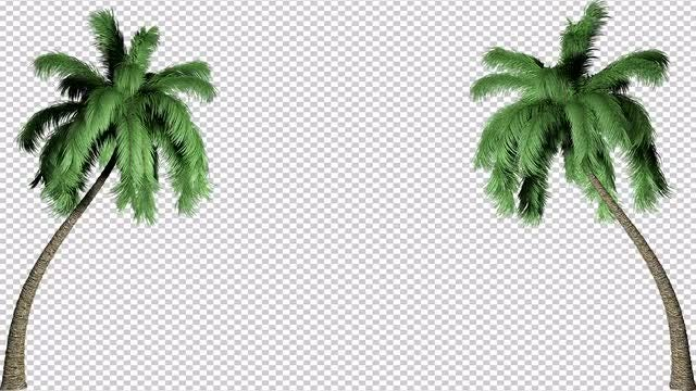Two Palm Trees Effect Background: Stock Motion Graphics