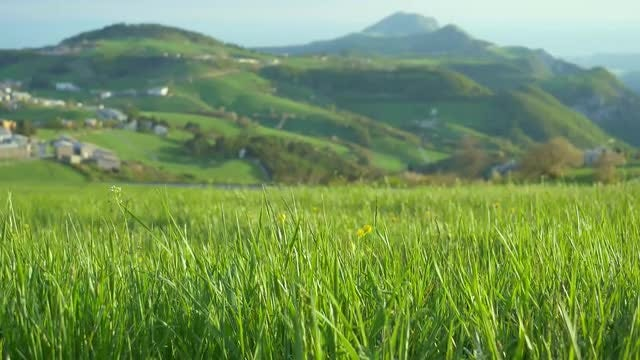 Green Grass And Flowers: Stock Video