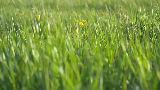 Green Grass: Stock Video