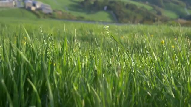 Mountain With Green Grass: Stock Video
