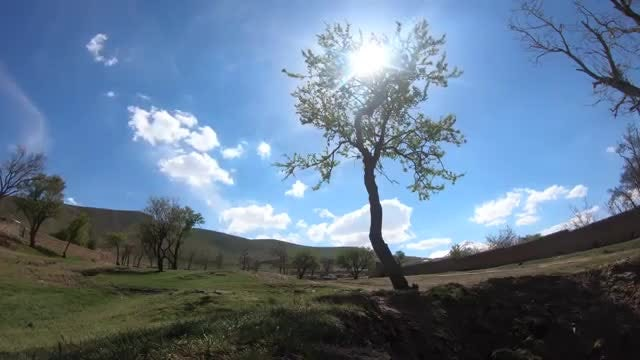 Time Lapse Of A Tree: Stock Video
