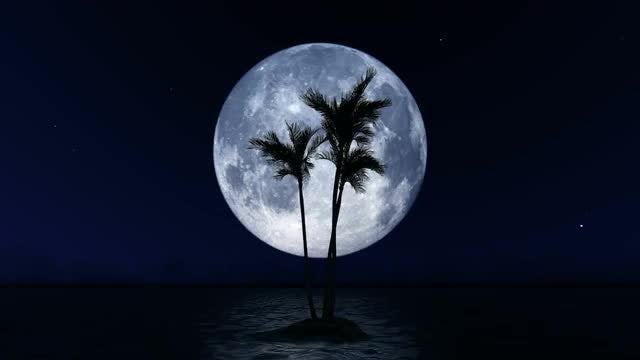 Full Moon And Palm: Stock Motion Graphics