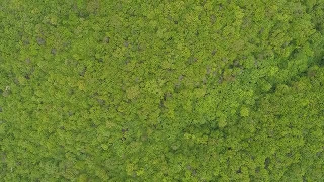 Top View Of Forest: Stock Video