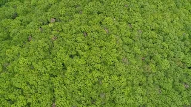 Thick Forest: Stock Video