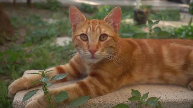 Cute Cat Resting: Stock Video