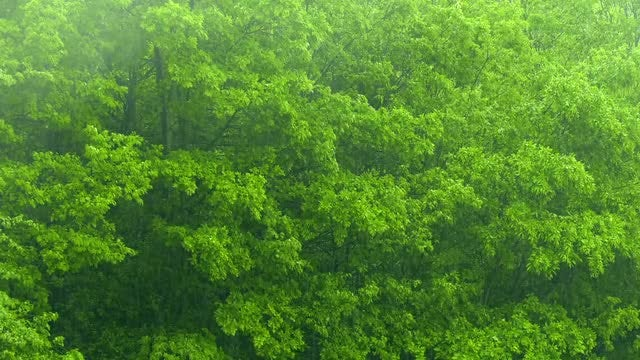 Rain: Stock Video