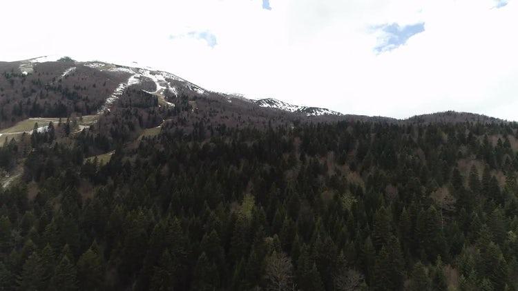 Mountain Trees: Stock Video